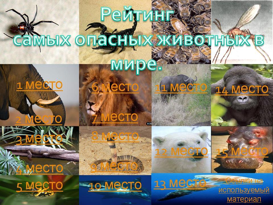 Какие животные самые опасные